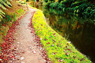 Autumn colors in Parque Terra Nostra Parque Terra Nostra is a natural park located on Sao Miguel island, Azores, Portugal