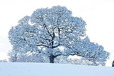 Winter scene, Herefordshire, England, UK.