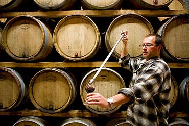 Henri Milan winery (Les Baux appellation controlee),Saint-Remy en Provence, Provence, France