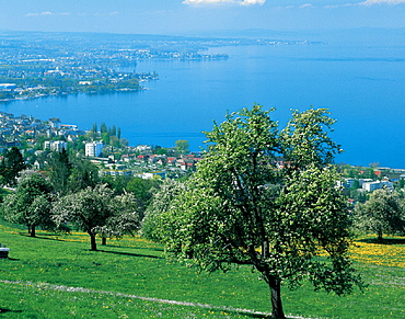 Arbon, canton St. Gallen, city, fruit trees, lake, Lake of Constance, overview, Rorschach, scenery, landscape, shore. Arbon, canton St. Gallen, city, fruit trees, lake, Lake of Constance, overview, Rorschach, scenery, landscape, shore