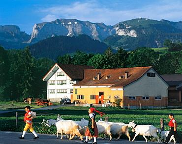 cattle drive, Alpfahrt, Appenzell, typical house, children, farm, farm house, folklore, mountains, nanny goats, nann. cattle drive, Alpfahrt, Appenzell, typical house, children, farm, farm house, folklore, mountains, nanny goats, nann