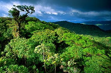 Cloud Forest Reserva Santa Helena, clouds, Costa Rica, Central America, nature, primeval forest, rain forest, scener. Cloud Forest Reserva Santa Helena, clouds, Costa Rica, Central America, nature, primeval forest, rain forest, scener