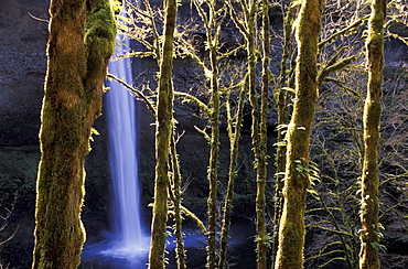 Oregon, Silver Falls, State Park, South Falls, USA, America, United States, Waterfall, trees, landscape. Oregon, Silver Falls, State Park, South Falls, USA, America, United States, Waterfall, trees, landscape