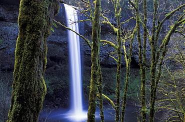 Oregon, Silver Falls, State Park, South Falls, USA, America, United States, Waterfall, tress, landscape. Oregon, Silver Falls, State Park, South Falls, USA, America, United States, Waterfall, tress, landscape