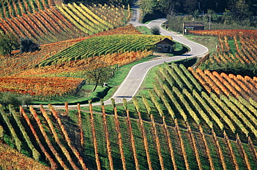 wine, vineyard, cultivation, outhouse, agriculture, series, picture series, seasons, autumn, scenery, landscape, stree. wine, vineyard, cultivation, outhouse, agriculture, series, picture series, seasons, autumn, scenery, landscape, stree