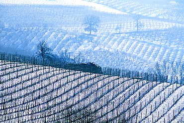wine, vineyard, cultivation, outhouse, agriculture, series, picture series, seasons, winter, snow, scenery, landscape, . wine, vineyard, cultivation, outhouse, agriculture, series, picture series, seasons, winter, snow, scenery, landscape,