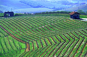 wine, vineyard, cultivation, outhouse, agriculture, series, picture series, seasons, spring, scenery, landscape, Italy. wine, vineyard, cultivation, outhouse, agriculture, series, picture series, seasons, spring, scenery, landscape, Italy
