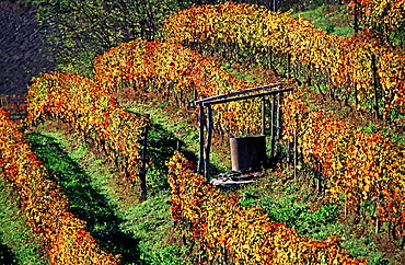 Monforte, wine, vineyard, cultivation, outhouse, agriculture, series, picture series, seasons, autumn, scenery, landsc. Monforte, wine, vineyard, cultivation, outhouse, agriculture, series, picture series, seasons, autumn, scenery, landsc
