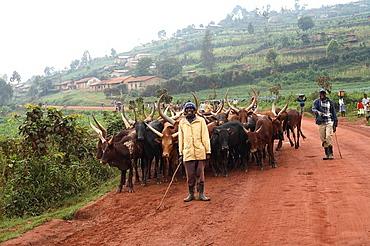 Queen Elizabeth, national park, Uganda, animal, animals, Ecosystem, Nature, Safari, vacation, Adventure, Adventures, t. Queen Elizabeth, national park, Uganda, animal, animals, Ecosystem, Nature, Safari, vacation, Adventure, Adventures, t