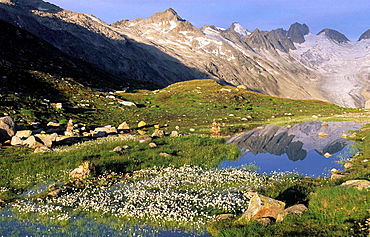 Switzerland, Europe, Canton Bern, Bernese Oberland, Oberaarhorn, Grimsel area, puddle, cottongrass, reflections, summe. Switzerland, Europe, Canton Bern, Bernese Oberland, Oberaarhorn, Grimsel area, puddle, cottongrass, reflections, summe