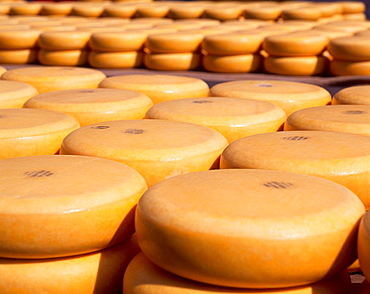 Gouda, cheese, stacked, outside, market, Alkmaar, Netherlands, Holland, Europe, Holland, Dutch, food, dairy, product, . Gouda, cheese, stacked, outside, market, Alkmaar, Netherlands, Holland, Europe, Holland, Dutch, food, dairy, product,