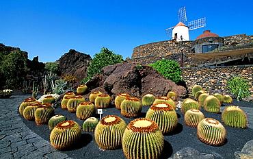 Lanzarote island, Spain, Europe, Canary islands, Jardin de Cactus, cactus garden, cacti, Cesar Manrique, travel, volca. Lanzarote island, Spain, Europe, Canary islands, Jardin de Cactus, cactus garden, cacti, Cesar Manrique, travel, volca