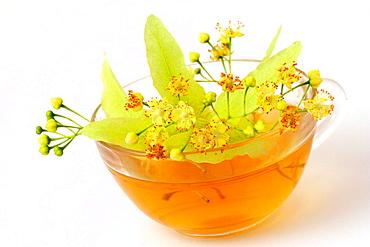 Linden (Tilia platiphyllos) tea