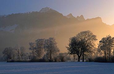 Sargans, Switzerland, Canton of St. Gallen, trees, hoarfrost, frost, morning mood, snow, winter, Landscape, scenery, nature, mountains, alps, Rhine valley, foggy, fog, misty, mist, twilight, dawn. Sargans, Switzerland, Canton of St. Gallen, trees, hoarfrost, frost, morning mood, snow, winter, Landscape, scenery, nature, mountains, alps, Rhine valley, foggy, fog, misty, mist, twilight, dawn