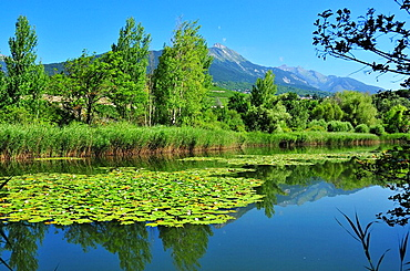 Switzerland, Valais, Sion, water lilies, flower, plant, swim, sheets, leaves, upholsterers, scene, green, blue, blossom, flourish, nymphaea, nymphaeae, reflection, lake, sea, pond, Bernese, Alps, scenery, travel, traveling, mountains. Switzerland, Valais, Sion, water lilies, flower, plant, swim, sheets, leaves, upholsterers, scene, green, blue, blossom, flourish, nymphaea, nymphaeae, reflection, lake, sea, pond, Bernese, Alps, scenery, travel, traveling, mountains