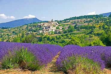 Blooming lavender field and Aurel village, Provence, France.