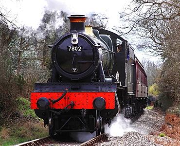 Steam Locomotive '7802' passing through Northwood, Severn Valley Railway, Worcestershire, England, Europe