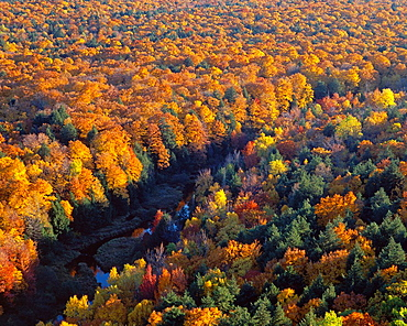 Autumn colored northern hardwood forest and Big Carp River, from the escarpment overlook, Porcupine Mountain Wilderness State Park, Upper Peninsula, Michigan, USA