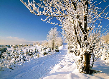 Germany, Winterberg, Sauerland, North Rhine-Westphalia, winter landscape