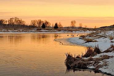 Junction Creek with waterfowl in early spring at sunrise Greater Sudbury, Ontario, Canada
