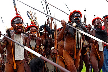 Local group of Papuas joing the Baliem Valley festival and running to the festival side with weapons, Jayawijaya region, Papua, Indonesia, Southeast Asia