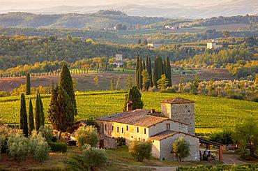 Chianti classico vineyards in autumn, Chianti classico vineyards in autumn