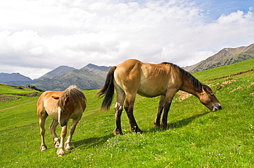Tor Valley is located at the L'Alt Pirineu Nature Park Lleida Catalonia, Spain