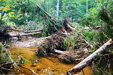 Flash floods from Tropical Storm Irene in 2011 rerouted sections of the Swift River in the White Mountains, New Hampshire USA This image shows a new section of the river This tropical storm / hurricane caused destruction along the East coast of the Unit. Flash floods from Tropical Storm Irene in 2011 rerouted sections of the Swift River in the White Mountains, New Hampshire USA This image shows a new section of the river This tropical storm / hurricane caused destruction along the East coast of the United States and the White Mountain National Forest of New Hampshire was officially closed during the storm