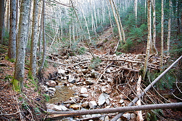 Landslide on the side of the Hancock Mountain Range in the Pemigewasset Wilderness of Lincoln, New Hampshire USA Heavy rains from Tropical Storm Irene in 2011 caused a old landslide that was in the process of being natural regenerated to slide again The. Landslide on the side of the Hancock Mountain Range in the Pemigewasset Wilderness of Lincoln, New Hampshire USA Heavy rains from Tropical Storm Irene in 2011 caused a old landslide that was in the process of being natural regenerated to slide again The natural process of regeneration must start all over The new landslide looks to follow the track of the old one This storm caused extensive damage along the East coast of the United States and the White Mountains, New Hampshire