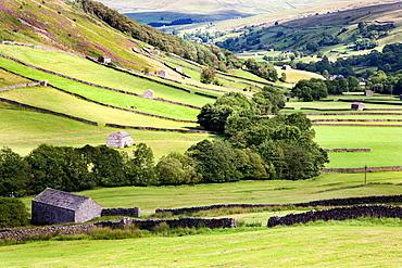 Barns near Kisdon Hill Swaledale Yorkshire Dales England