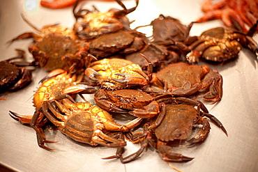 Crabs in Pontevedra market, Galicia, Spain
