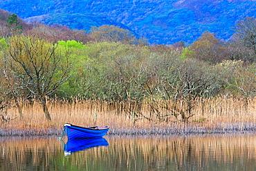Blue boat on the Killarney Lake, Killarney National Park, County Kerry, Ireland, Europe