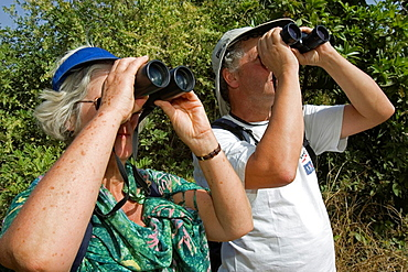 Bird watchers with binoculars spotting migratory and local species in bush south of The Gambia