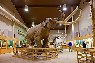 Hot Springs, South Dakota - The Mammoth Site displays mammoth bones approximately 26,000 years old and, in the exhibit hall, a full-sized mammoth replica