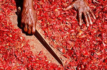 Drying mace, Grenada