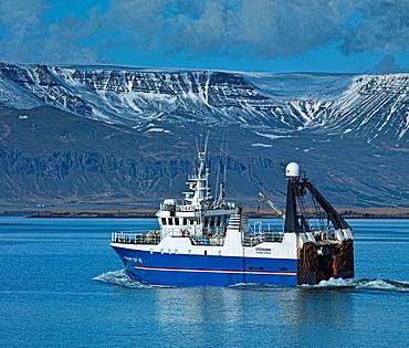 Fishing trawler with Mt Esja in background, Reykjavik Harbor, Iceland