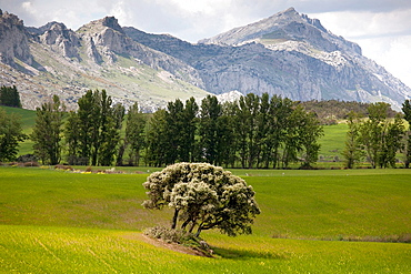spring meadow with trees, Nature, Torcal de Antequera, Malaga, Andalucia, Spain, Europe