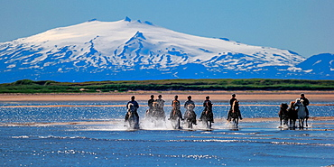 Horseback riding on Longufjordur, Snaefellsjokull Glacier in the background, Snaefellsnes Peninsula, Iceland