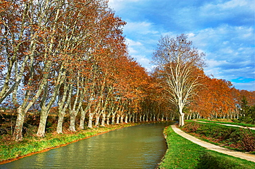 France, Languedoc-Roussillon, Aude 11, Canal du Midi, tree lined canal