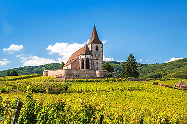 The picturesque church of Saint-Jacques-le-Majeur with surrounding vineyards, Hunawihr, Alsace, France, Europe