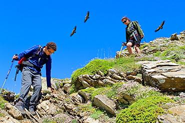 Vultures flying over hikers walking in Roncal valley  Larra-Belagua massif  Pirineos  Navarra  Spain