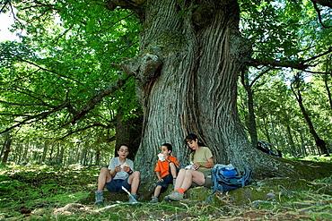 Hikers resting in the chestnut grove of El Tiemblo, in Iruelas Valley Natural Park  avila province  Castilla y Leon  Spain