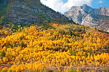 Ruby Mountains, Fall colors blaze in Lamoille Canyon in the Ruby Mountains near the city of Elko in northeast Nevada
