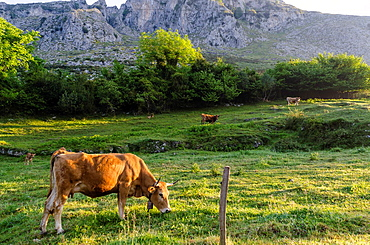 Cortines valley views with foggy background, Asturias, Spain
