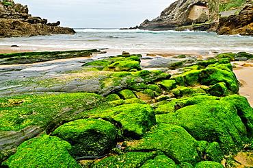 Moss on the rocks shore in Santa Justa beach, Ubiarco, Cantabria, Spain