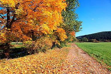 Country road in autumn, Sumava National Park, Czech Republic, Europe