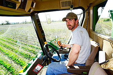 Farmer in Cotton Picker in Field Being Harvested Mississippi