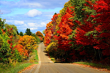 Country road with colorful fall leaves autumn trees Indiana