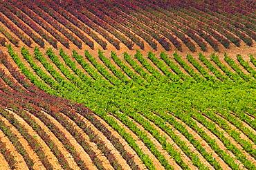 Vineyards. Briones, La Rioja province, Spain.