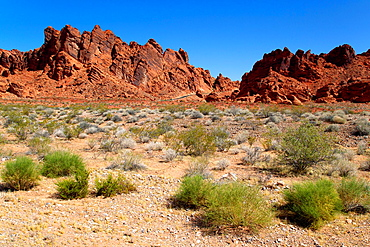The Valley of Fire derives its name from red sandstone formations, formed from great shifting sand dunes durind the age of dinosaurs, 150 million years ago  Nevada, USA